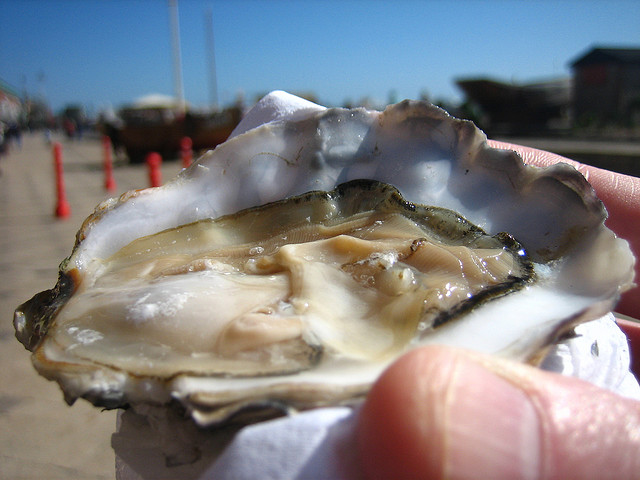 We may admire the first person ever to eat an oyster, like this one from the Pacific Northwest. We may soon meet the last, because of rapid ocean acidification. (Photo by adactio/Flickr).