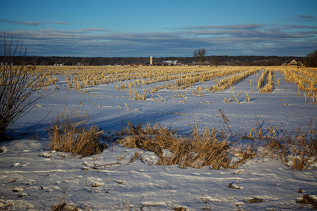 The (Corn) Wasteland: Unprotected fields like this, the soil laced with leftover fertilizer and pesticide, will wash away with their toxic contents come spring. Yet we must have more corn! (Photo by Perry McKenna/Flickr)