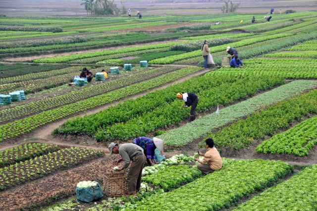 Farms like these in Vietnam are the ones that feed the world, provide work and security for families, and preserve the land. We're stamping them out. (Wikipedia Photo)